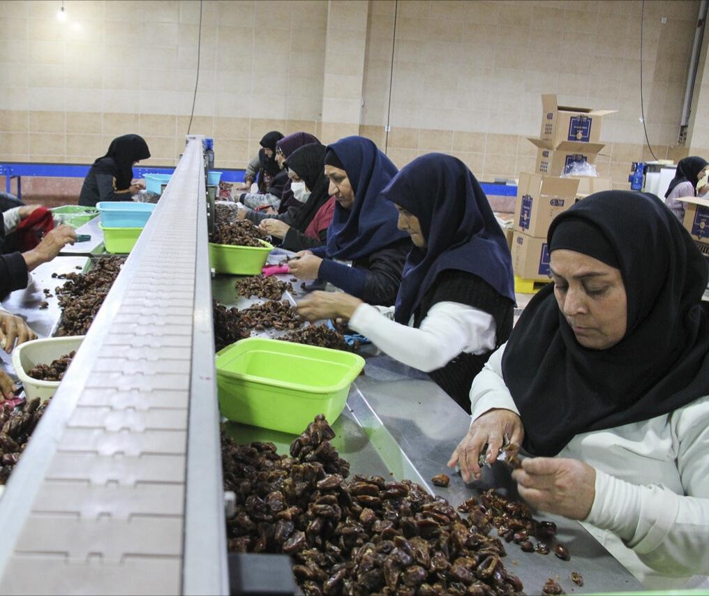 ضرورت بازاریابی برای صادرات خرمای خوزستان